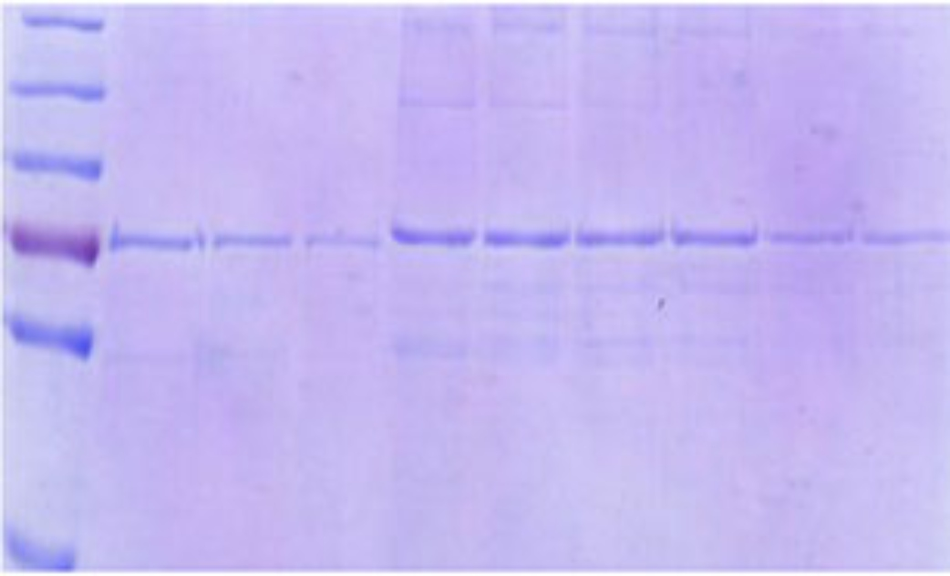 Purification of M5 encoded protein