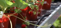 Transforming UK food systems: Herts academics publish new policy toolbox