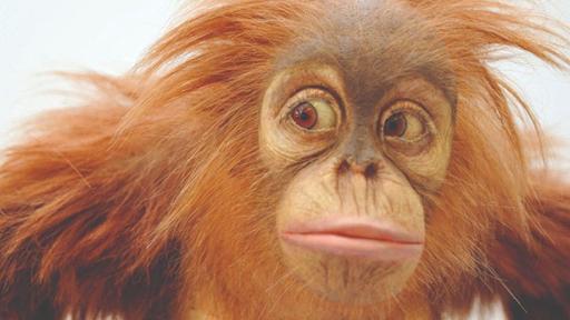 Model monkey