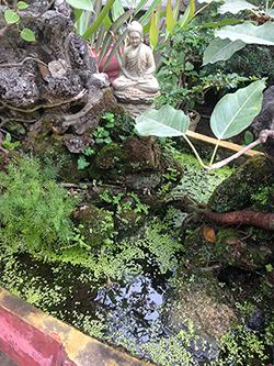 Lemna growing in a Vietnamese Lake