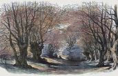 Mark Gorman examines the campaign to preserve Epping Forest