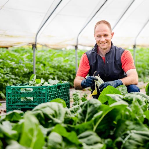 Farmer picking greens