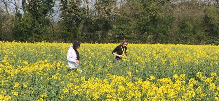 Innovative collaboration launched to combat crop disease